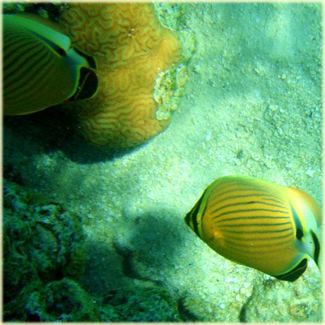 Photos Taken By Sokala Villas Guests Muri Beach